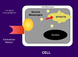 Animation: Introduction to Signal Transduction